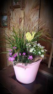 Emmer met Carex, Saxifraga, Phlox.