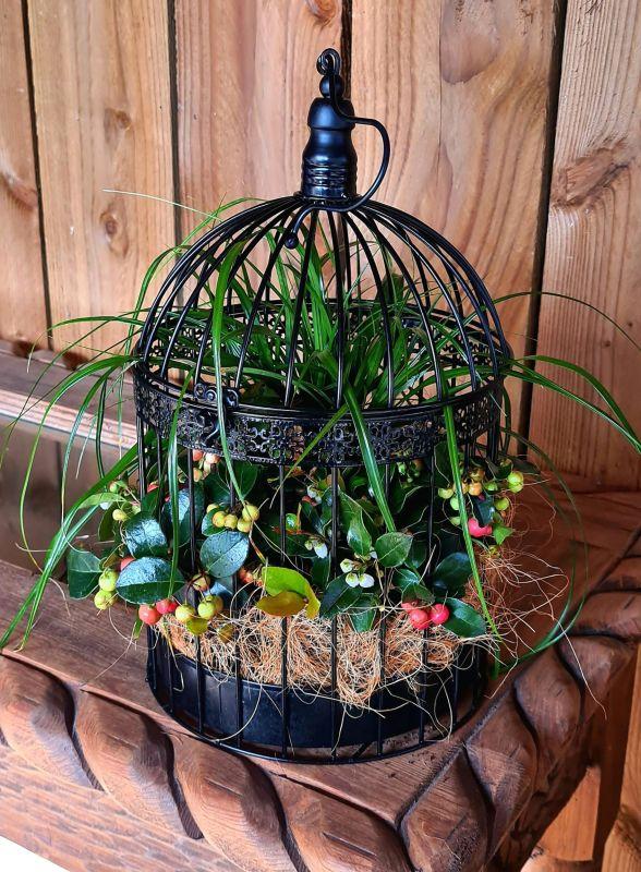 Vogelkooi Groot Gaultheria/Carex