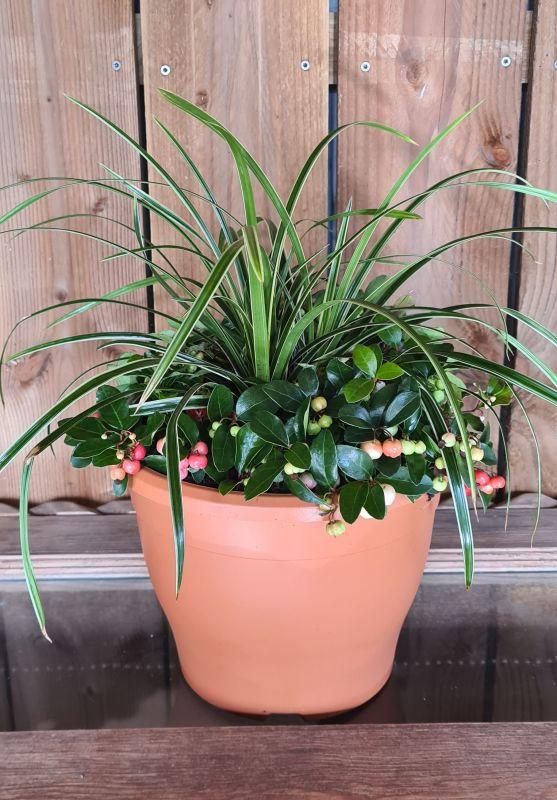 Sabrina TC pot met Gaultheria/Carex